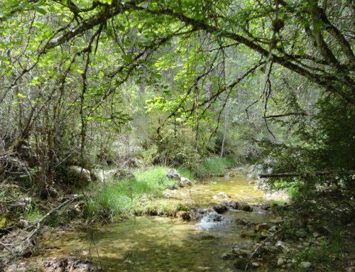 Sendero de las Dehesas, Carrascosa-Valsalobre-Cueva del H.